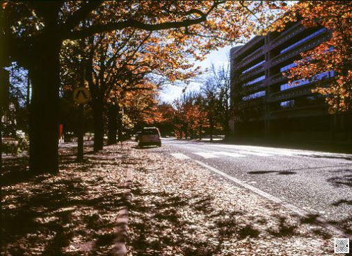 My Canberra - on film mainly Canberra, Barton, Macquarie Street, back in 2015  Olympus OM4, zuiko lens, Fuji slide film  www.pavelvrzala.com  #Australia #Canberra #Barton #Olympus #OM4 #zuiko #film