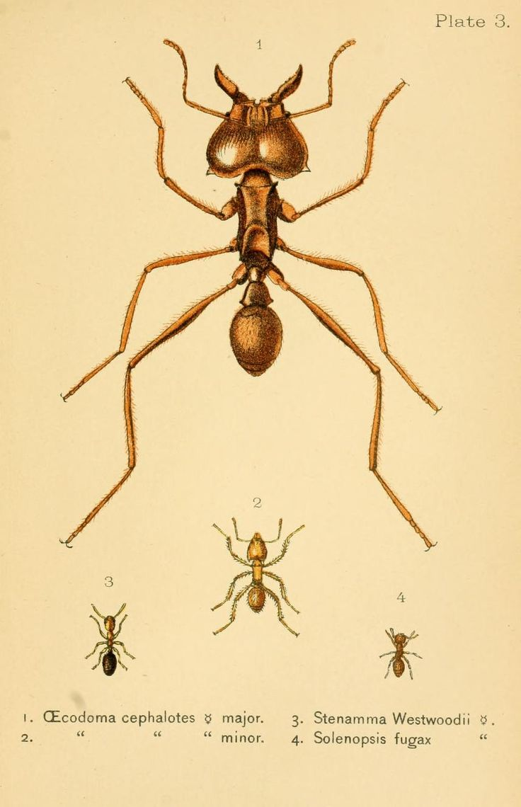 535 best insects images on pinterest insect art drawings and