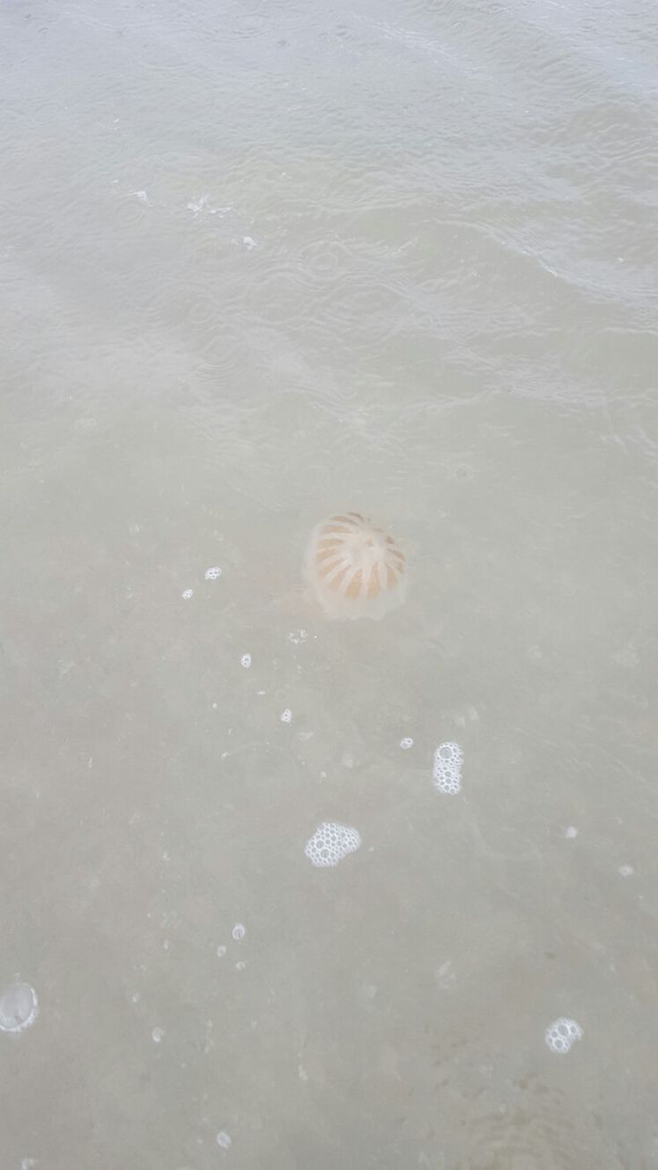 :-) saving the world, one jelly fish at a time. Yes, it hurts when they sting. No, it's not true you should pee on it.