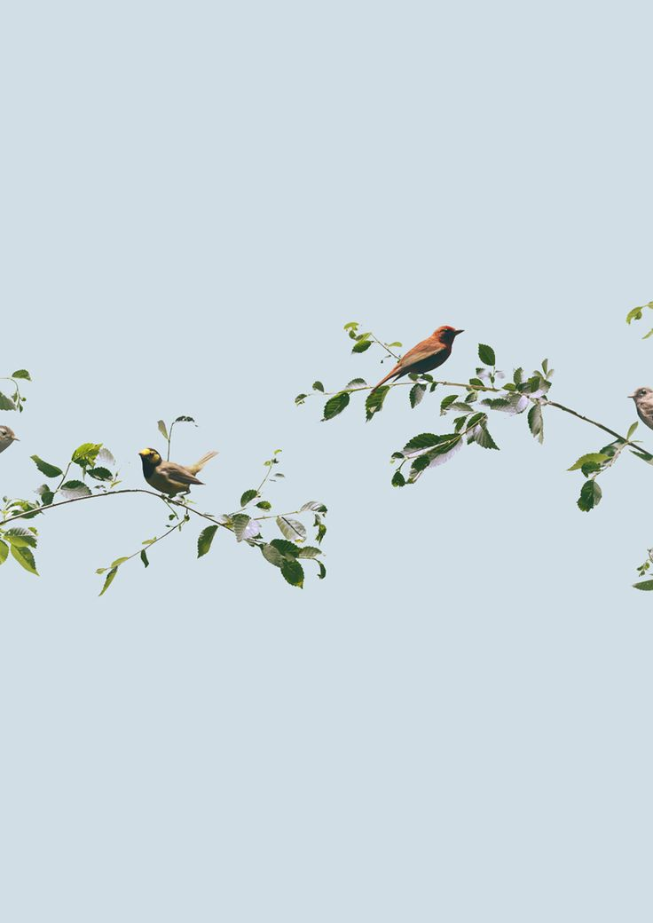Birds by Andrew B. Myers.