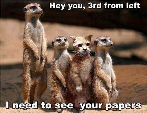 Meerkats and a MeerCAT lol