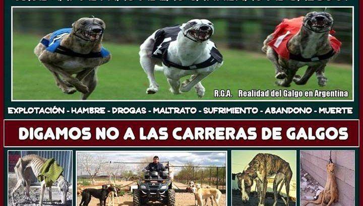 """NO A LAS CARRERAS DE GALGOS EN PLOTTIER - NO A LAS CARRERAS DE GALGOS EN NEUQUEN – NO A LAS CARRERAS DE GALGOS EN LA ARGENTINA    NO A LAS CARRERAS DE GALGOS !!!!!!!!!!!!!      PLOTTIER, NEUQUEN - ARGENTINA    A PUNTO DE LEGALIZAR   LA EXPLOTACIÓN DE GALGOS    ¿""""PARA GENERAR UN DESPEGUE CULTURAL EN..."""