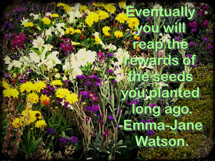 Look at the seed you sow today.