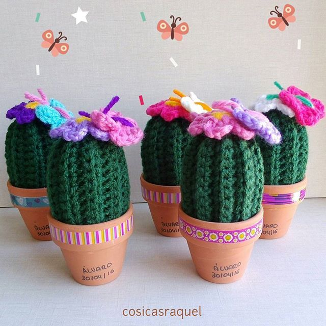 142 best cactus. images on pinterest | instagram, cacti and