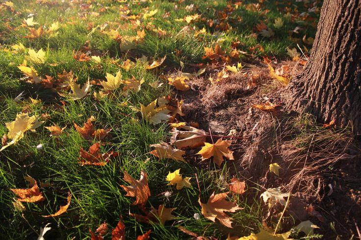 Autumn: Leaves and grass 3 by Tomáš Zúbrik on 500px