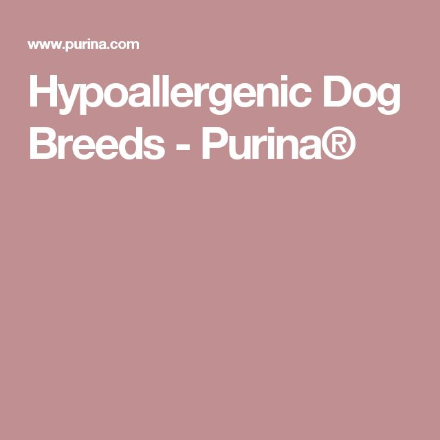Hypoallergenic Dog Breeds - Purina®