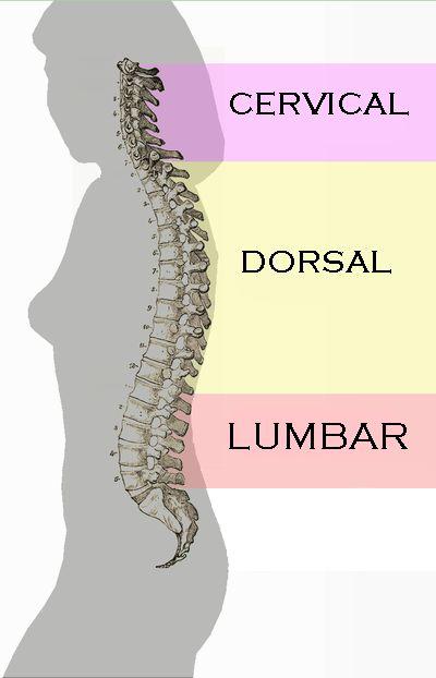 El dolor de espalda durante el embarazo: cómo es