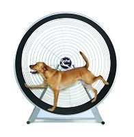 Dog Treadmill Sale: Going On Now + Free Shipping!