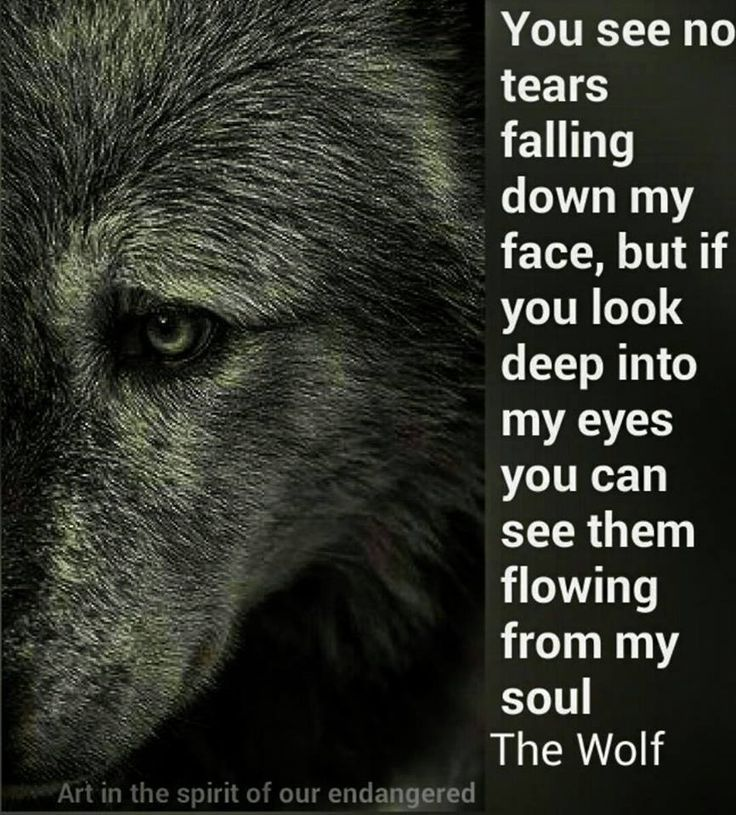 Best 25+ Lone Wolf Quotes Ideas On Pinterest
