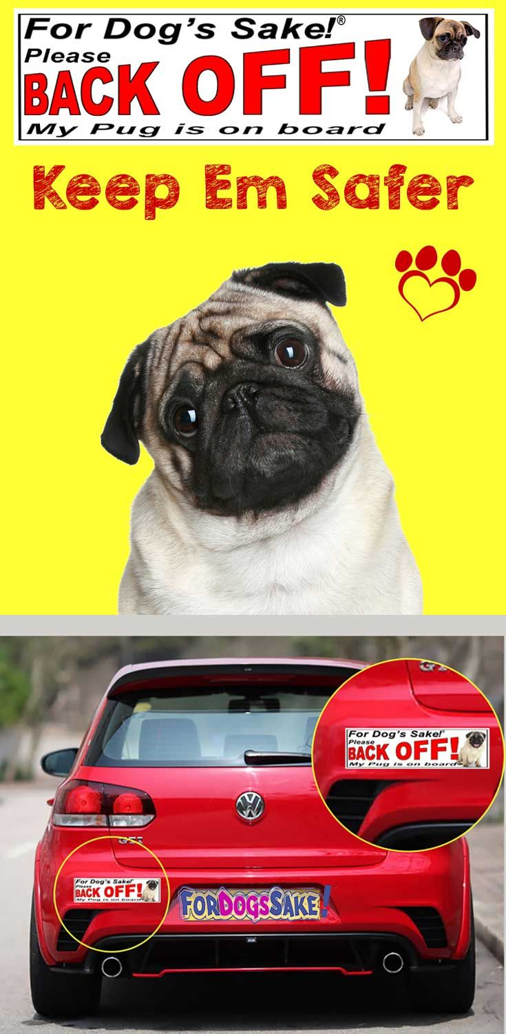 For dogs sake be careful when transporting your pug in your car its not you of course its those others motorists driving to close when youre driving