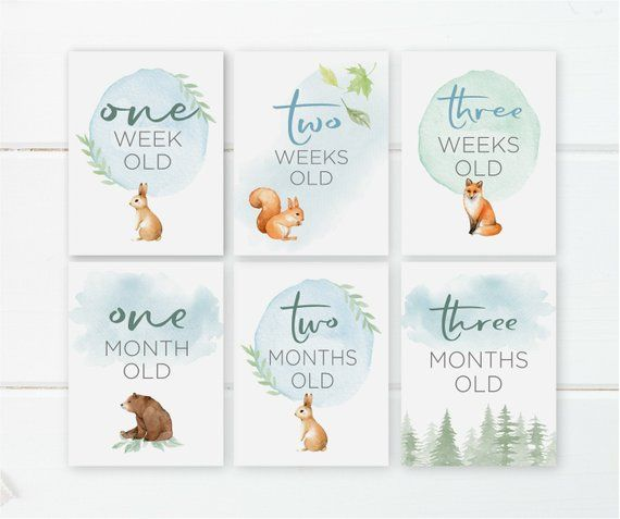 Photography Props Baby Milestone Cards 28 Cards Zoo Theme Baby Shower Gift