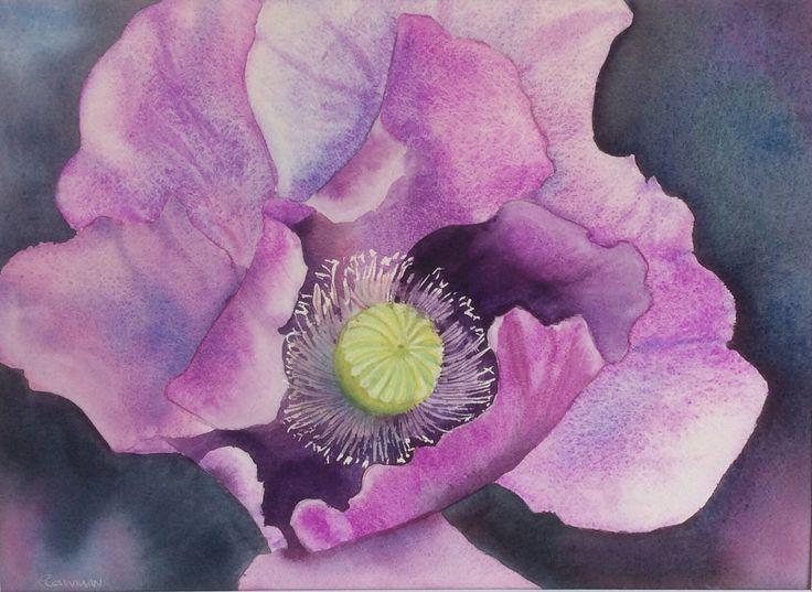 Purple poppy Watercolour by Heather Plowman