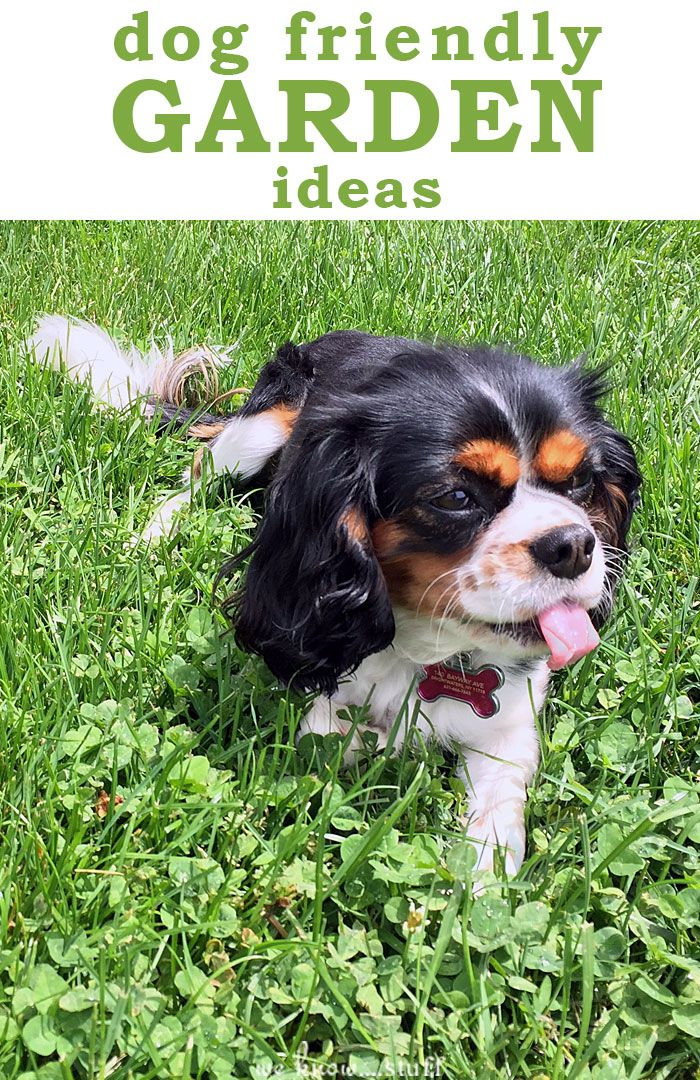 Best 25+ Dog friendly garden ideas on Pinterest | Dog friendly plants, Plants  safe for dogs and Dog garden