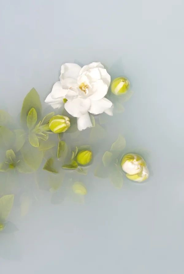 'Gardenia' Limited Edition Print by Artist, Catherine Jensen