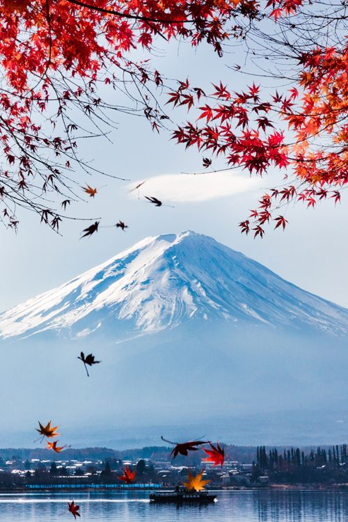 Red Maple Fuji ~ By Andrew K.H. Fan