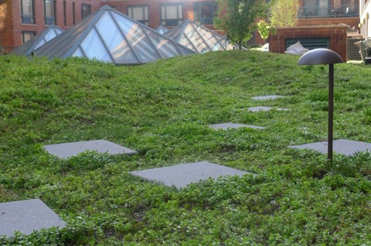 Beth Israel Hospital's 19,000 sq. ft. Green Roof is Dotted wit...
