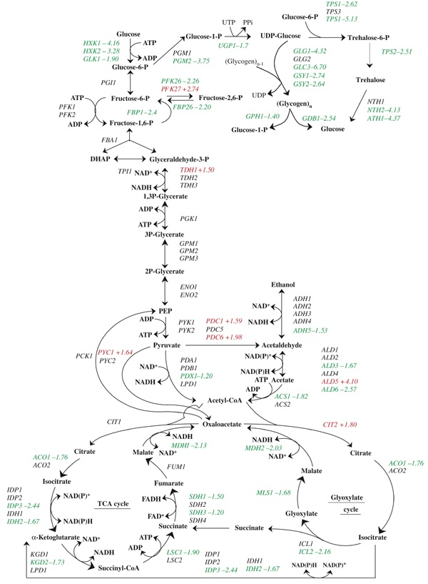 essays in biochemistry systems biology Emerging in tandem with genomics is the field of bioinformatics, associated with   statement of purpose: in an essay of 250 – 500 words, state your purpose in.