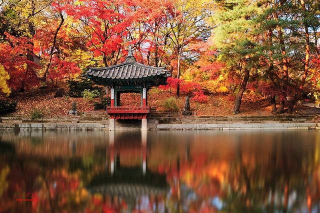 Seoul, South Korea #Autumn