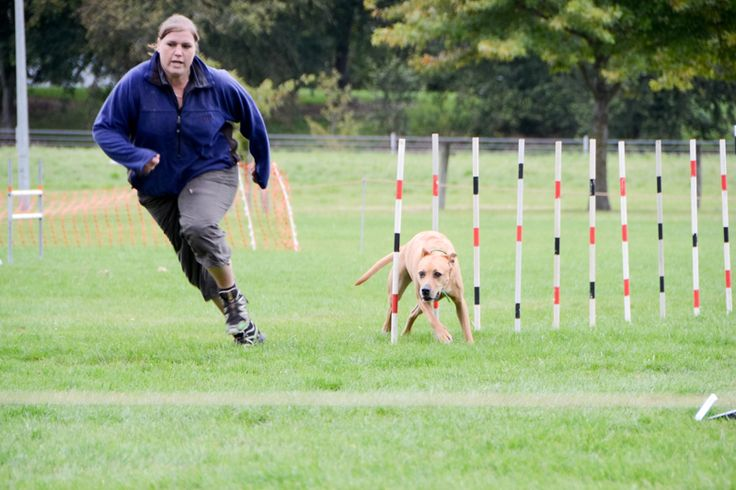 Doggie agility - a fun day out for dog and owner.  #christchurch #newzealand #imagesbyShivonne