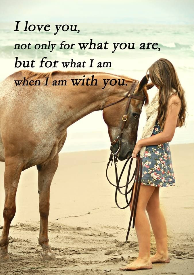 71 best Horse Quotes by Equiline images on Pinterest