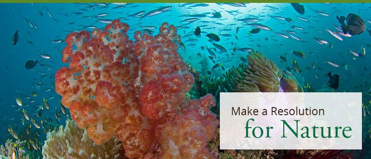 Make a Resolution for Nature
