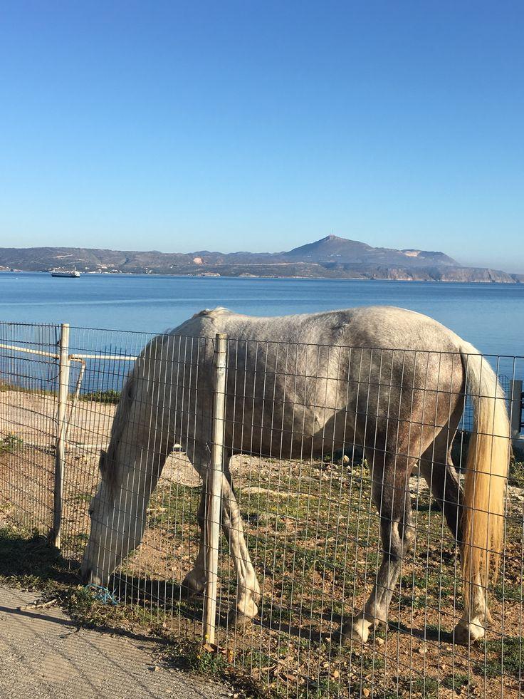 En Crète Grèce vous pouvez faire de sublimes ballades sur la plage à cheval.Vue de la baie d'Almyrida où se trouvent les appartements de la résidence ALMYRIDA SANDS.