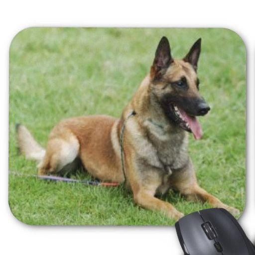 >>>The best place          	Belgian Malinois Mousepad           	Belgian Malinois Mousepad in each seller & make purchase online for cheap. Choose the best price and best promotion as you thing Secure Checkout you can trust Buy bestReview          	Belgian Malinois Mousepad Review from Associa...Cleck Hot Deals >>> http://www.zazzle.com/belgian_malinois_mousepad-144177595762719941?rf=238627982471231924&zbar=1&tc=terrest