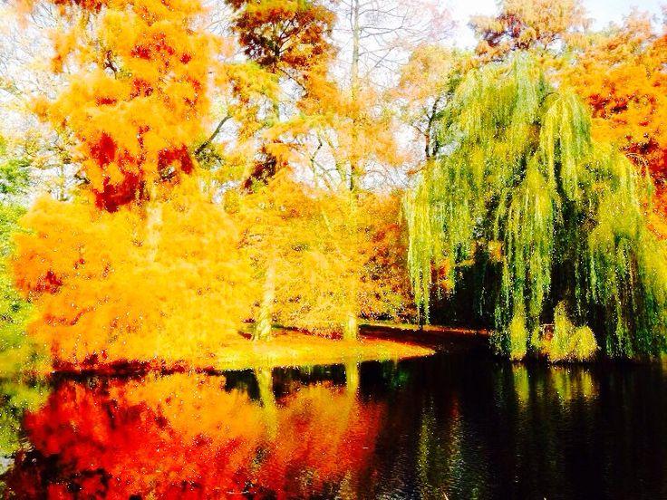 Vondelpark reflections in autumn