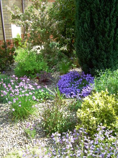Lovely gravel garden plantings.