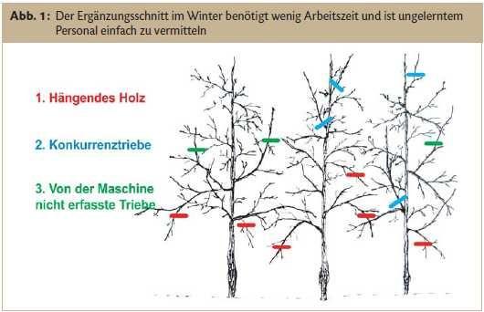 17 best ideas about bl hende str ucher winterhart on. Black Bedroom Furniture Sets. Home Design Ideas