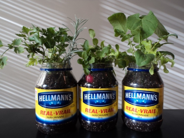 Recycle old Hellmann's mayonnaise jars and use as planters!