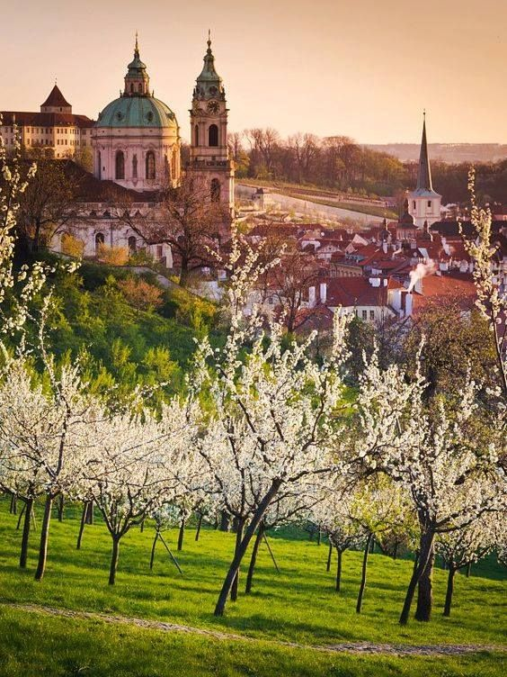 When is Prague at its most romantic season? In the spring, when Petřín Park is in bloom with thousands of cherry blossoms.  Photo by: Prague City Tourism