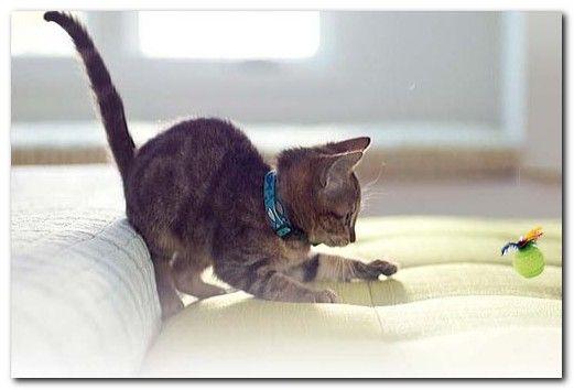 игры уход за котятами
