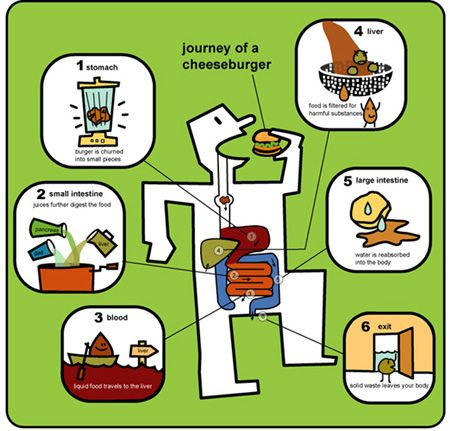 Digestive track for kids  journey of a cheeseburger... by joanneliuyunn, via Flickr