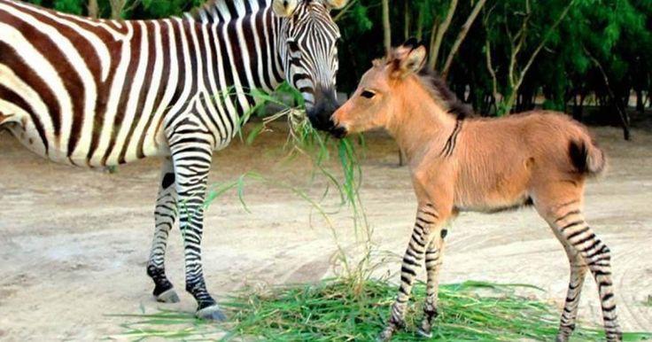 18 Απίστευτα Ζώα που Όντως Υπάρχουν! Με το 9… Θα Τρίβετε τα Μάτια σας! Crazynews.gr