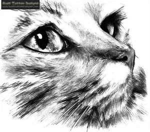 15 Best Drawing Ideas Images On Pinterest