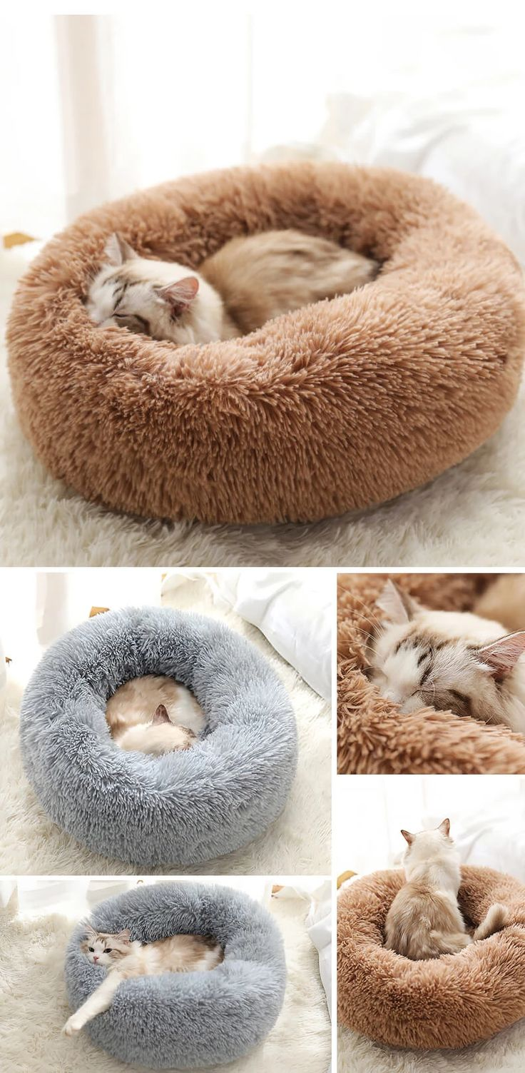 Rainbow Marshmallow Cat Bed (With images) Cat bed, Cats