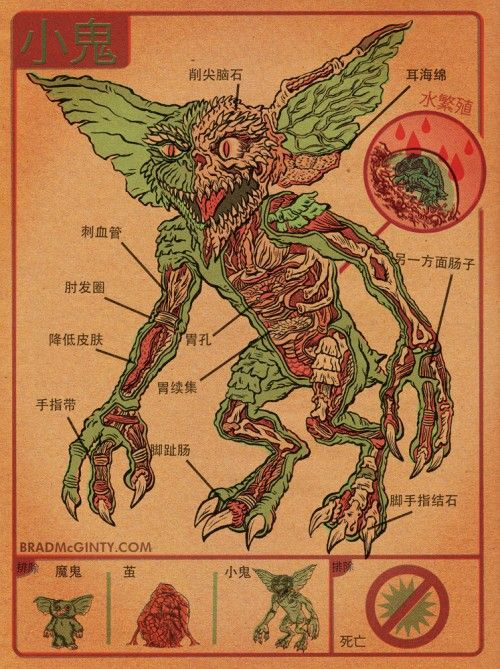 Anatomical Cross-Section of Gremlin.