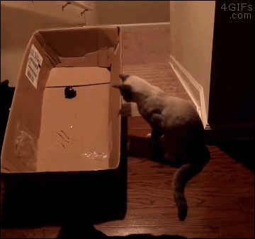 Sacanage,m com o gato.. kkk Cat-trap-stairs-sledding