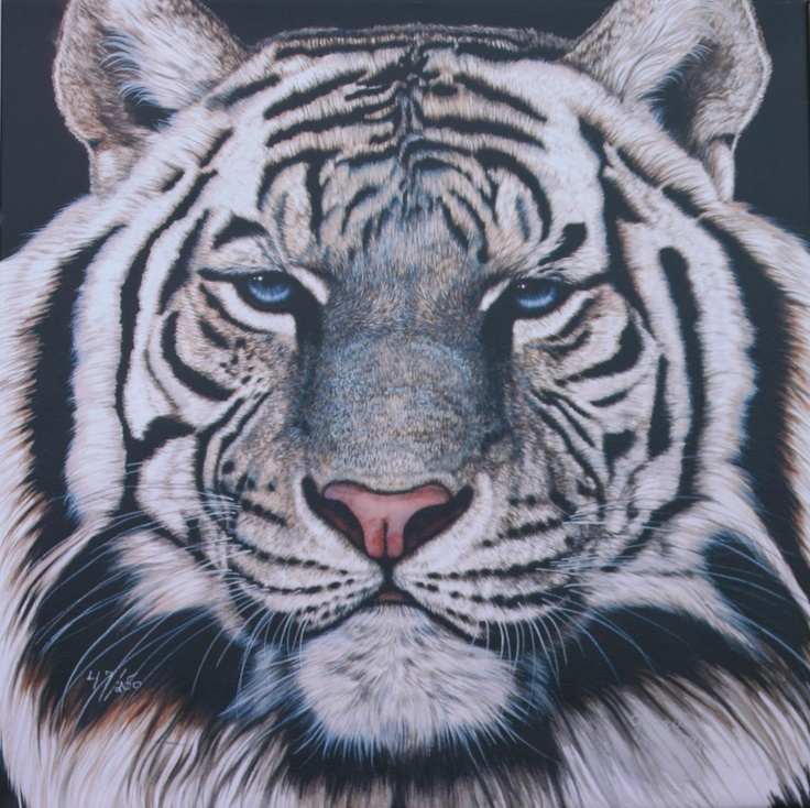angry white tiger blue eyes - photo #14
