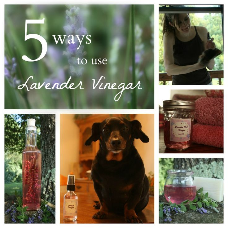 FIVE USES FOR LAVENDER VINEGAR Bath Soak, Cleaner, Hair Rinse, Flea Spray, Fabric Softner. Make by covering lavender buds with hot vinegar and cover. Store in the dark for a few weeks, shaking periodically. Place plastic wrap btw the metal top and glass to prevent rusting and metallic taste.