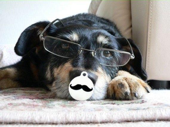Mustache Dog Pet ID Tag Custom by BowWowzerZ on Etsy, $10.00