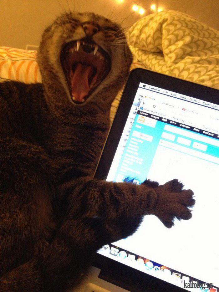 Смешные коты (60 фото) | Смешные фото кошек, Смешные мемы ...