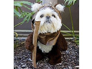 7 Ewok Dog Costumes That Are Simply Awesome