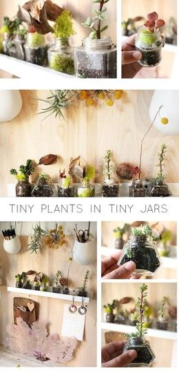Tiny plants in ink jars make for a quirky little indoor container garden of sorts and fit easily on a shelf.