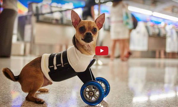 Life has been tough with these 2 little guys but 3d printng technology comes to the rescue! Watch Tumbles and TurboRoo make their first steps! (videos) #cute #3dprinting
