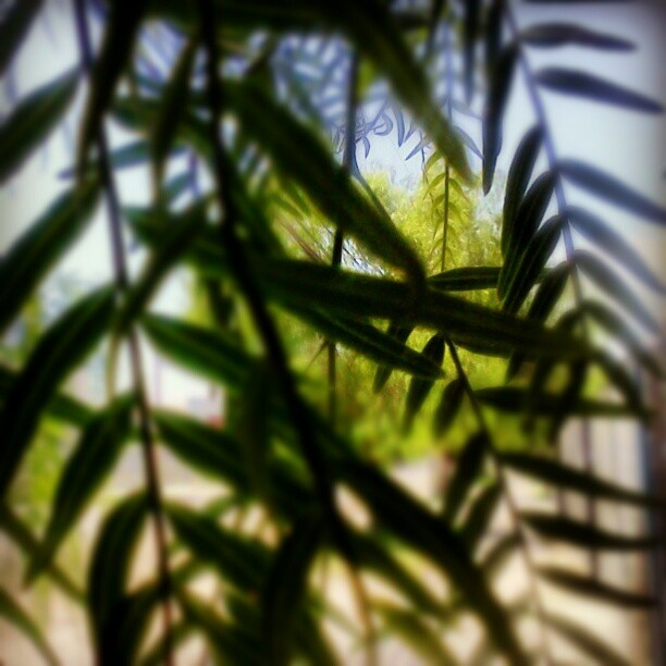 """""""De tanto mirar las hojas, me he convertido en parte de ellas"""