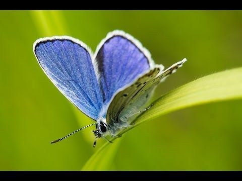 ▶ Abraham Hicks ~ Practicing the vibrational frequency of abundance and love - YouTube, San Diego January 12, 2013
