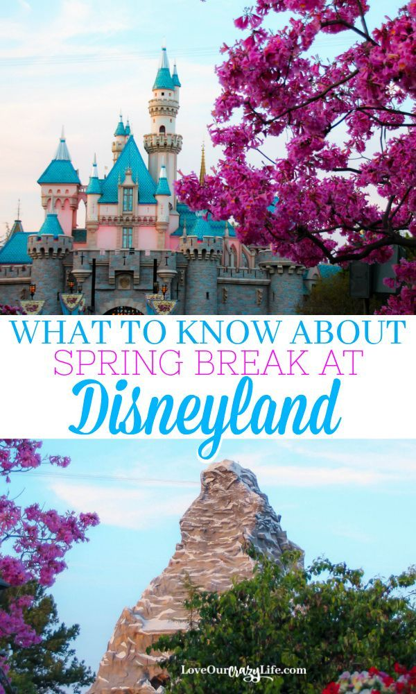 Heading to Disneyland for Spring Break? We have everything you need to know before heading to Southern California for vacation. Disney travel tips for spring. #Disneyland #Disney #Spring  via @thebeccarobins