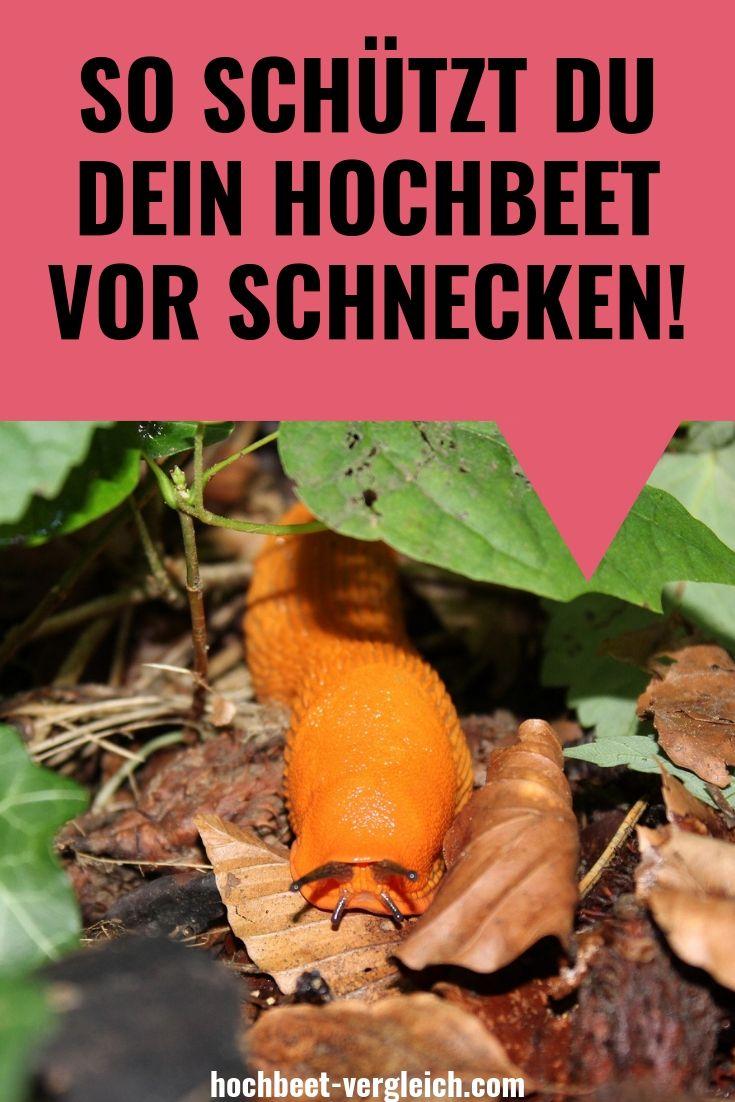 So Schutzt Du Dein Hochbeet Vor Schnecken Hochbeet Ratgeber Hochbeet Schneckenabwehr Schneckenschutz